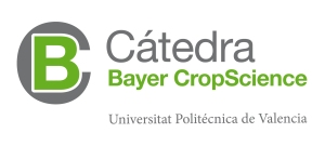 Catedra Bayer
